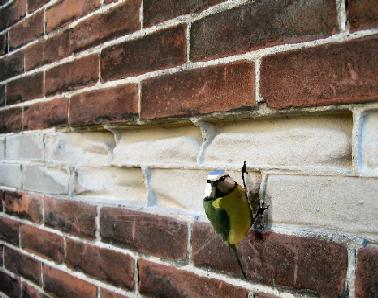 Bouwcenter filippo beverwijk muren info - Muur steen duidelijk ...